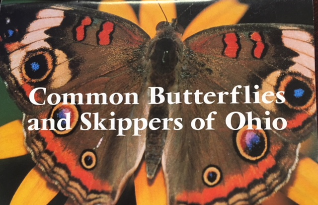 Image for Common Butterflies and Skippers of Ohio (Publication 204)
